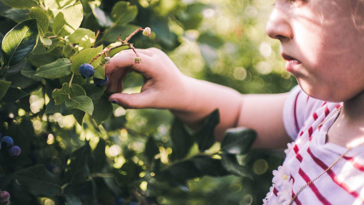Sila čučoriedok: Uľavte tráveniu a rozhýbte metabolizmus
